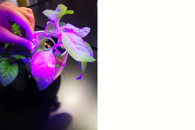 """""""Glowing Plant"""" workshop - Agrobacterium mediated plant transformation - with Andreas Stürmer at the Ars Electronica Center in Linz 2018, photo: Günter Seyfried."""