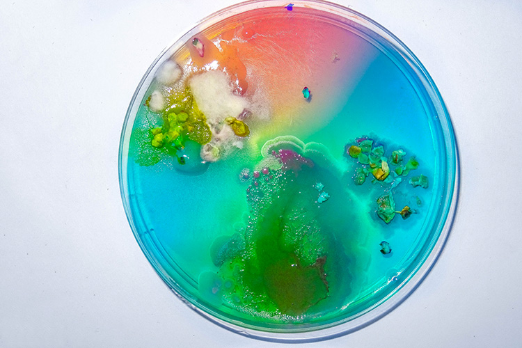 Petri dish with slime mould results from the open Lab class slime moulds workshop with Günter Seyfried in April 2018, photo: Andreas Frauenschuh.